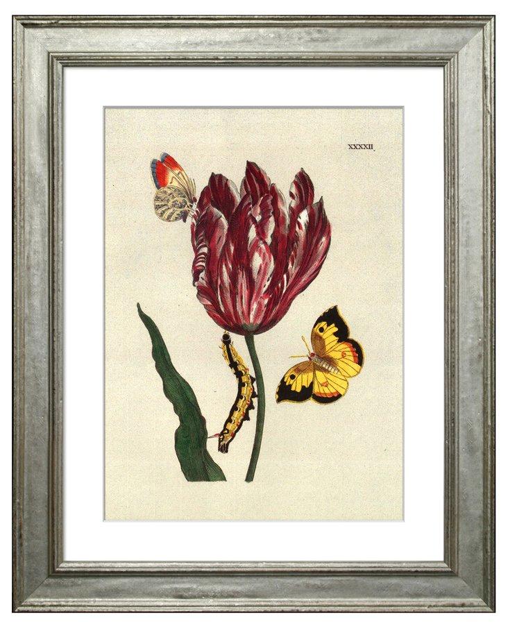 Tulip & Butterflies