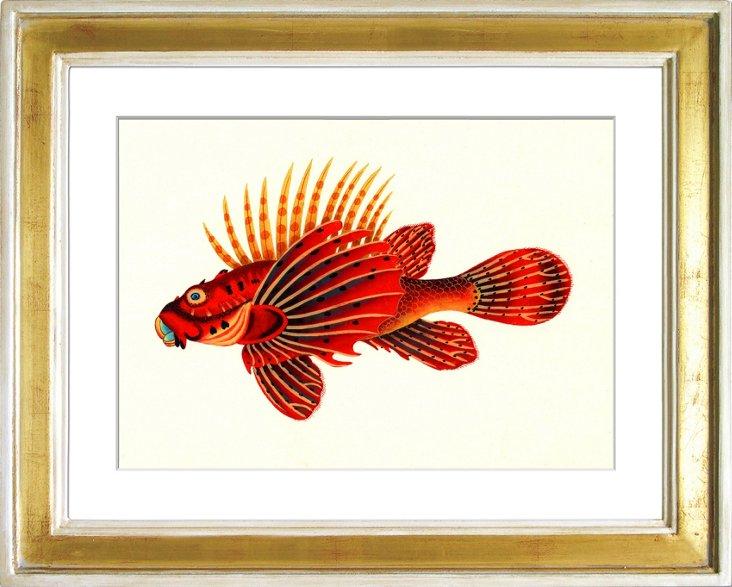 Exotic Fish III