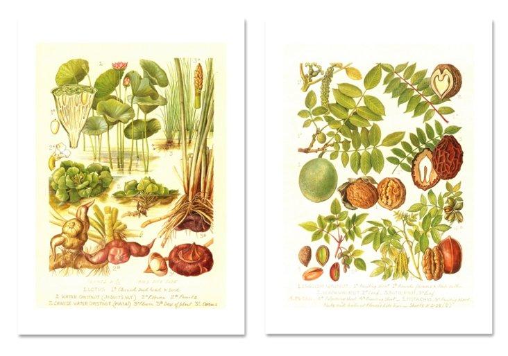 Water Chestnut, Pistachio & Walnut