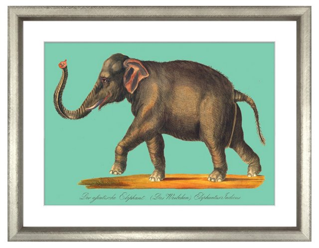 Karl Brodtmann, Elephant II