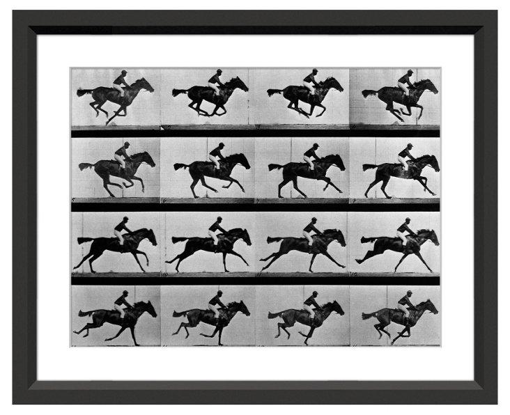 Eadweard Muybridge, In Motion