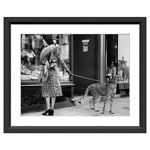 Cheetah Who Shops in London