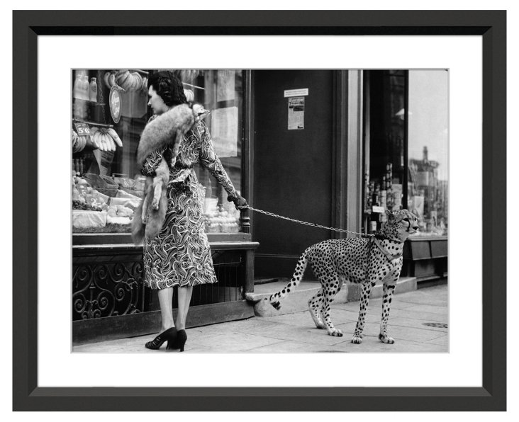 Cheetah Who Shops in London