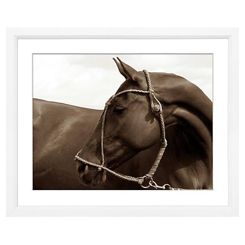 Alice Gipps, Polo Pony I