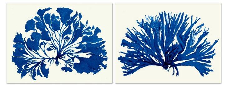 Miranda Baker, Corals I Diptych