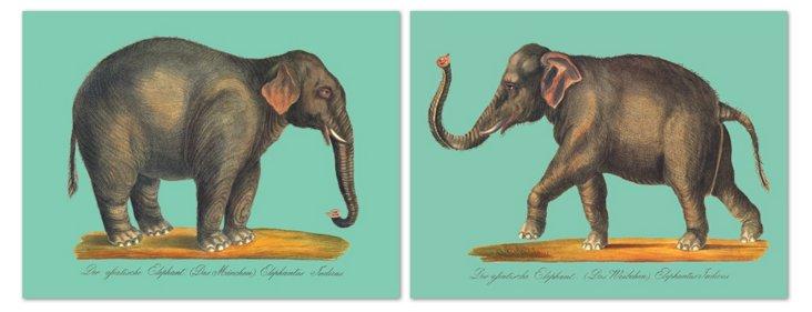 Karl Joseph Brodtmann, Elephant