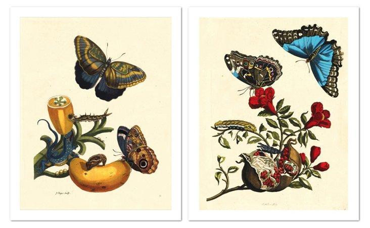 Merian Butterflies Diptych
