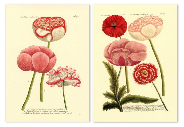 Weinmann Flowers I