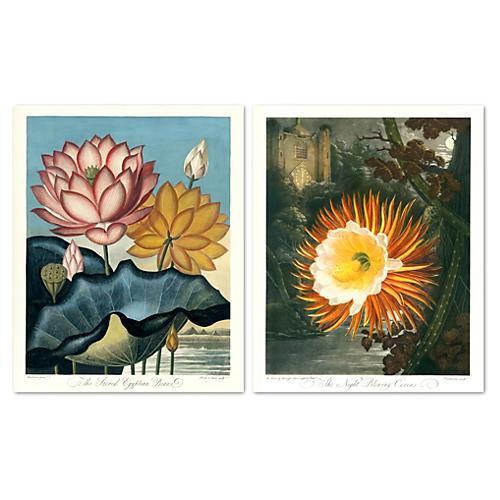 Midnight Flowers 1812