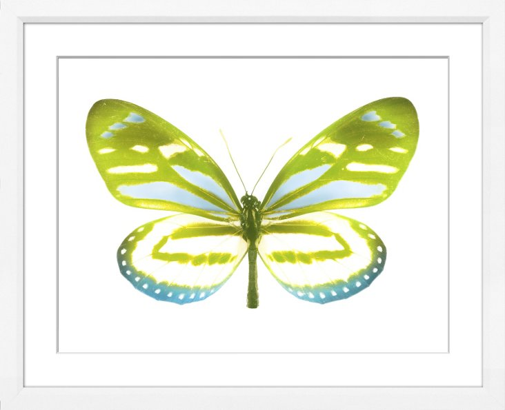 Soft Green Butterfly