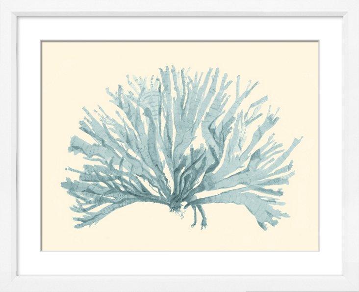 Miranda Baker, Corals X