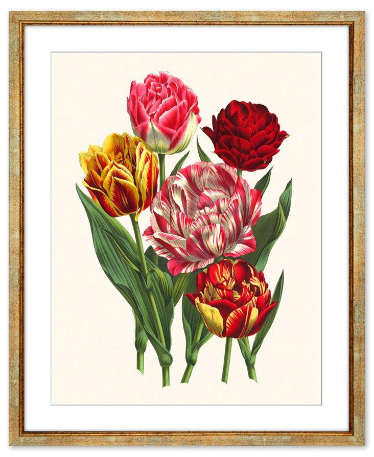 Flores des Serres I