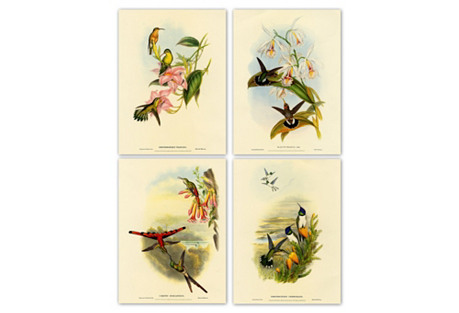 John Gould, Hummingbirds II, 1865