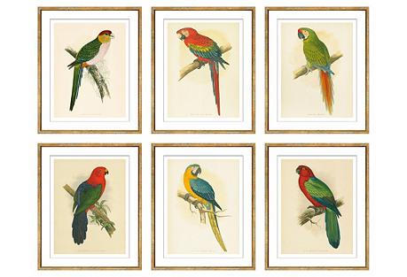 Parrots, Set of Six