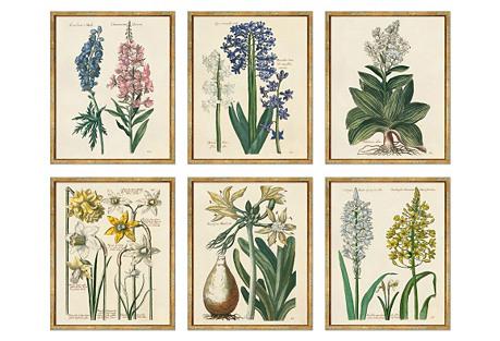 Theodor De Bry, Flowers