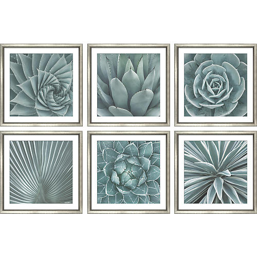 William Stafford, Succulents (6-Pc)