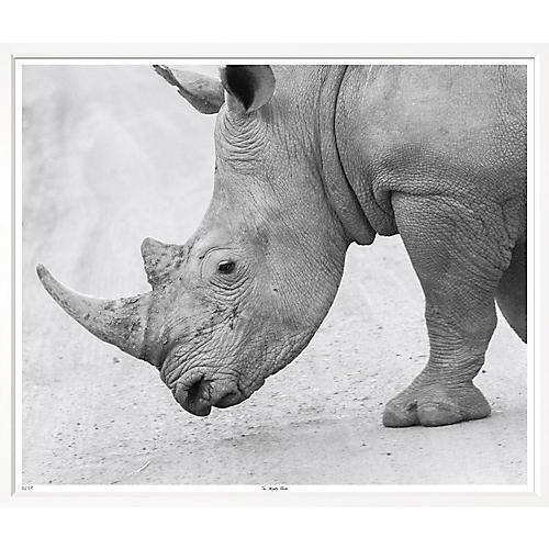 The Mighty Rhino, William Stafford
