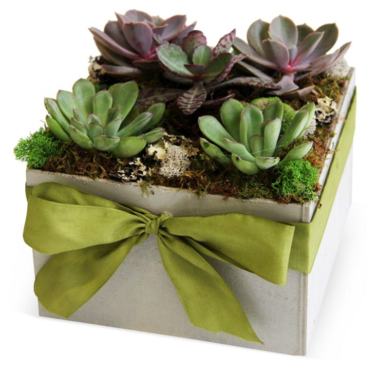 """8"""" Succulent in Pot w/ Bow, Live"""