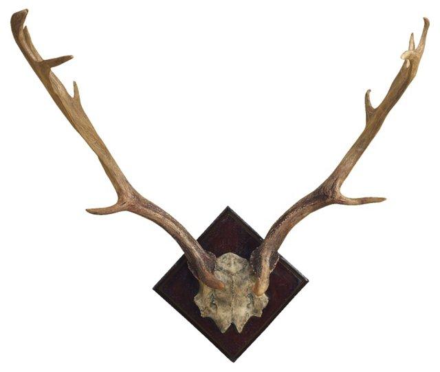 Fallow Deer Antler Wall Decor, Natural