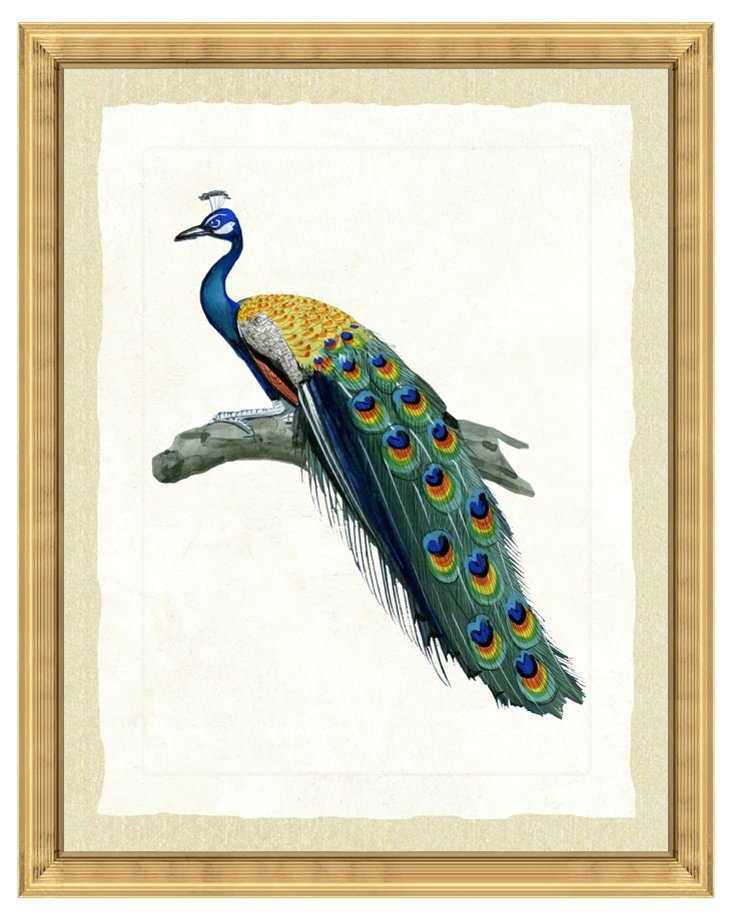 Gold-Framed Peacock Print II