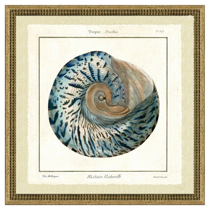 Sea Life Shell III