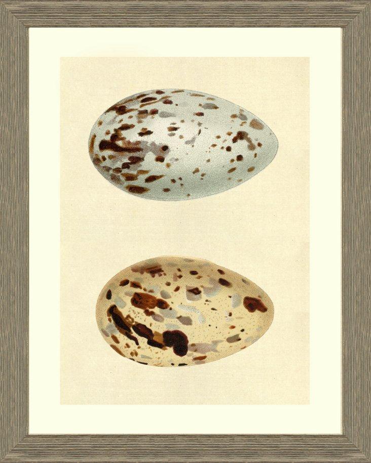Egg I