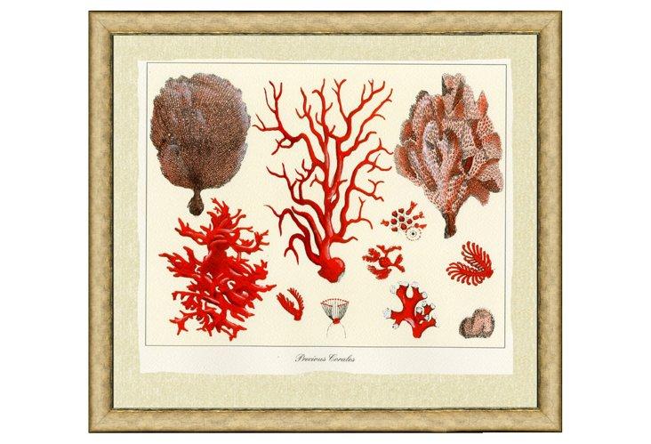 Hand-Colored Coral Il