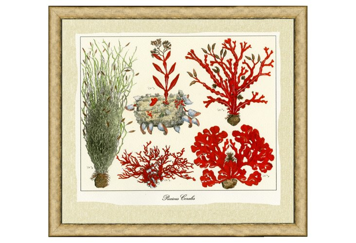 Hand-Colored Coral III