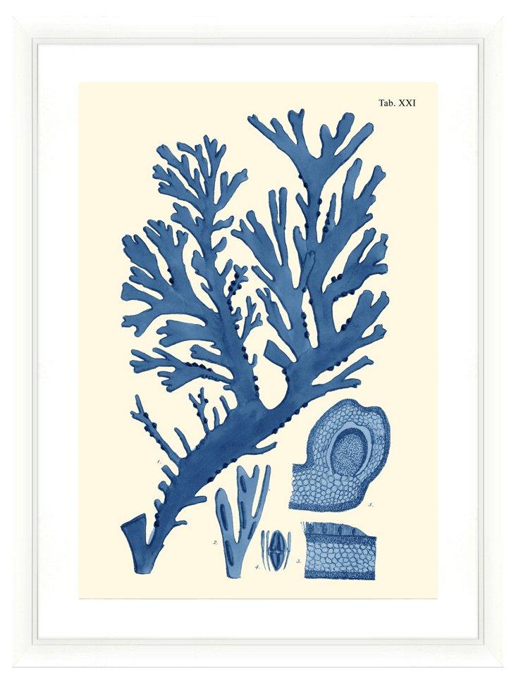 Seaweed Print III