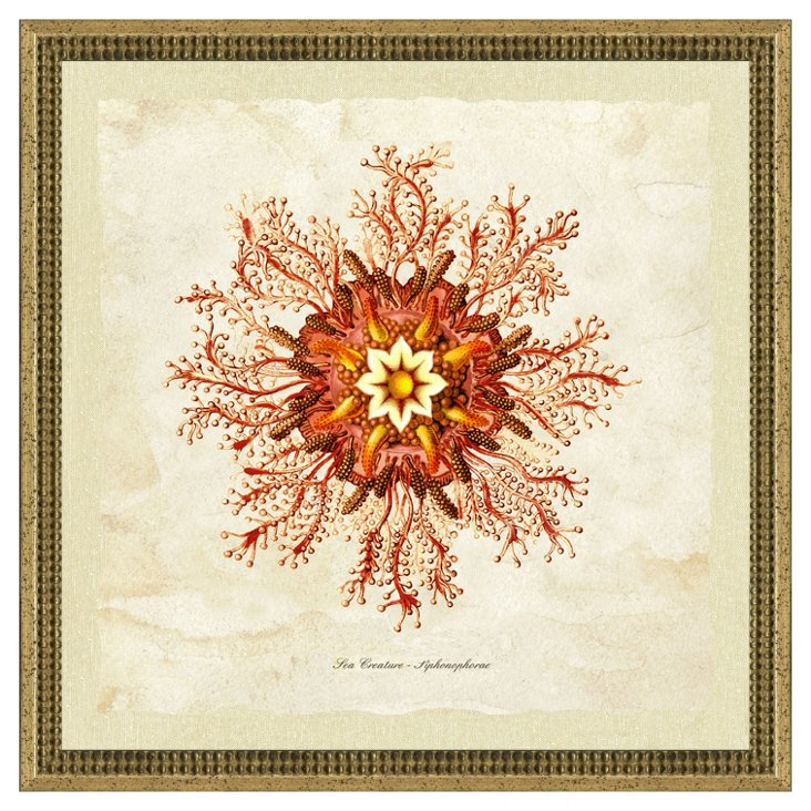Coral Jellyfish II