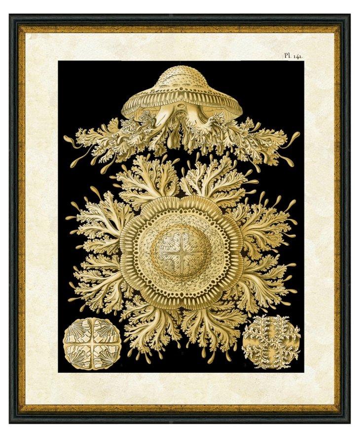 Golden Sea Life Print II