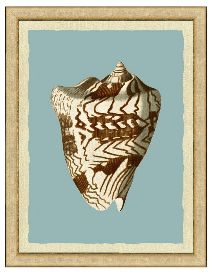 Teal Single Shell Print I