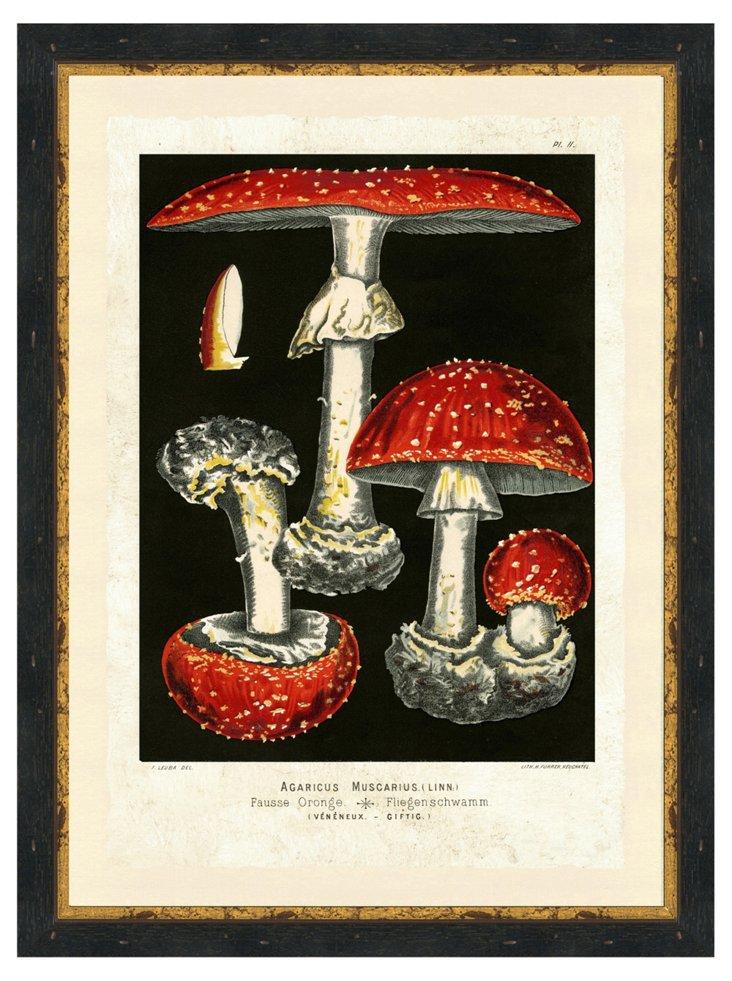 Mushroom Print V