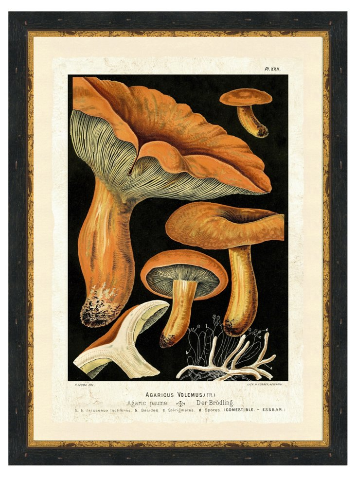 Mushroom Print VI