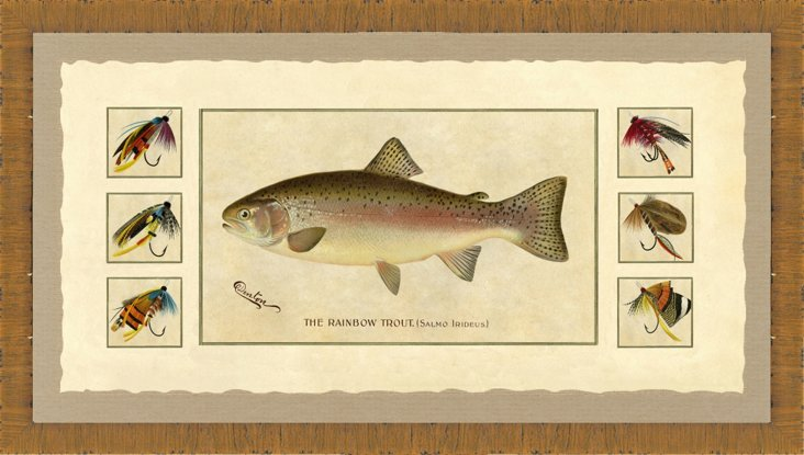 Wood Framed Trout Fishing Print