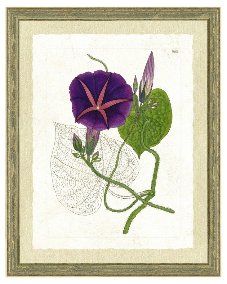 Aged Wood Framed Floral Print II