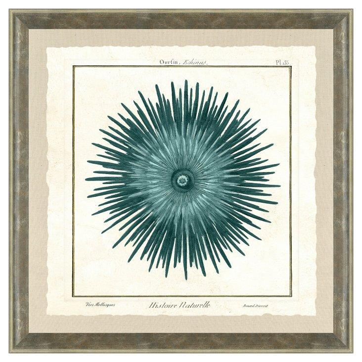 Silver Framed Sea Life Print I