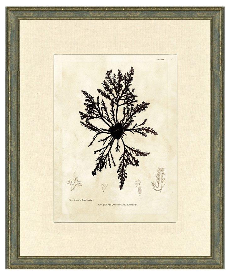 Aged Wood Framed Coral Print I