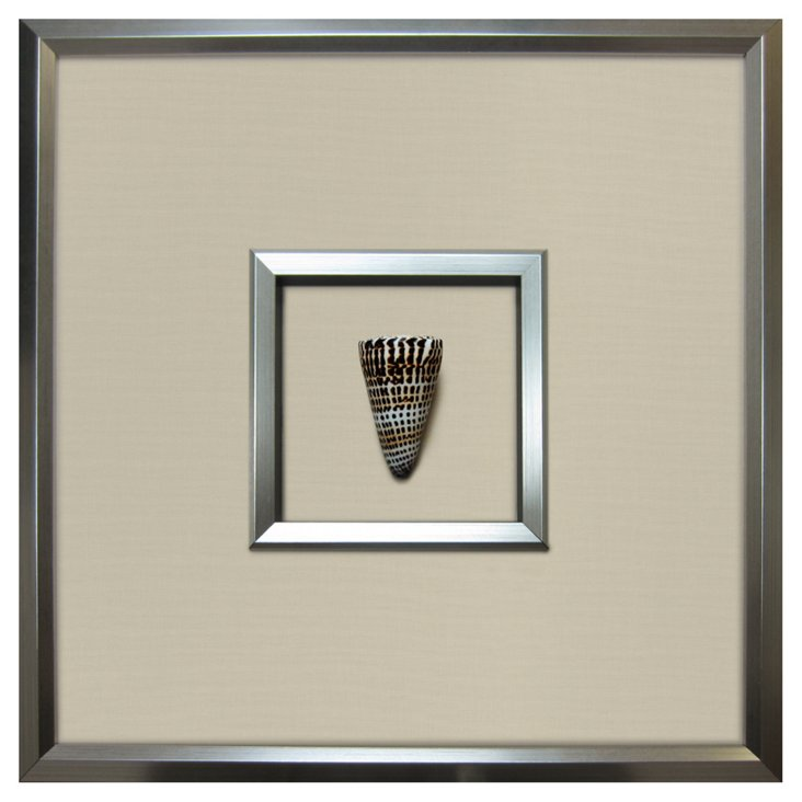 Authentic  Letter Cone Shell Framed