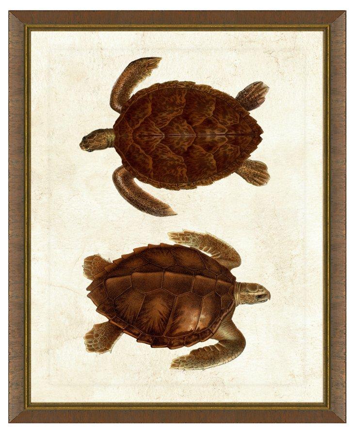 Gold Lip Brown Wood Framed Turtle Print