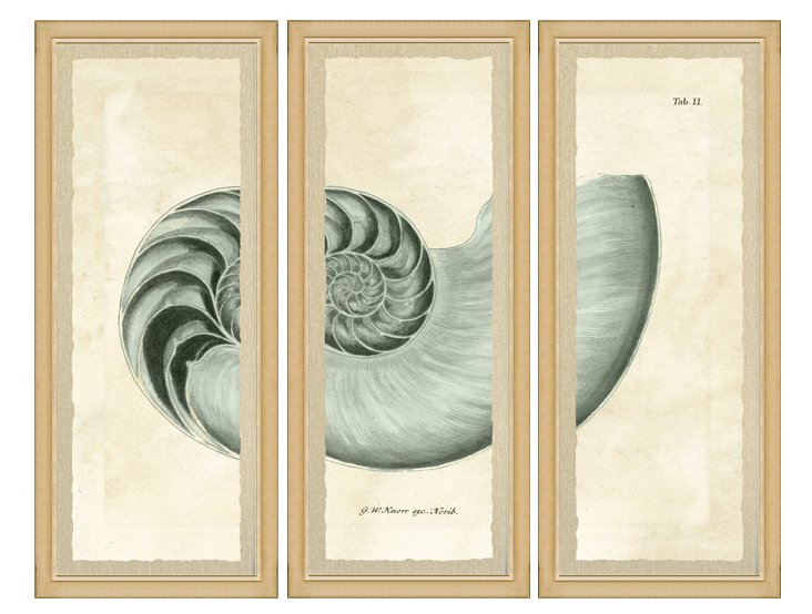 Cream Framed Shell Triptych