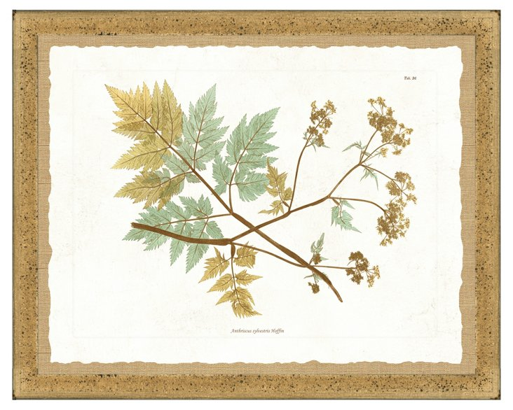 Distressed Gold Framed Nature Print II