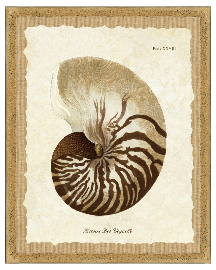 Flecked Brown Framed Shell Print II