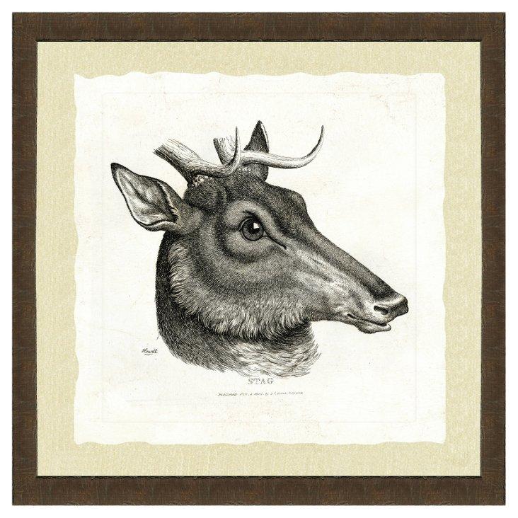 Dark Wood Framed Deer Print I