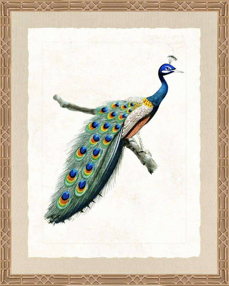 Ornate Silver Framed Peacock Print I
