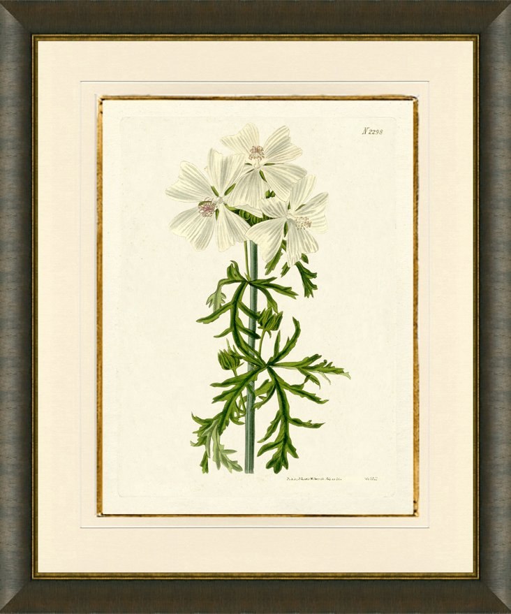 Wood Framed Botanical Print I
