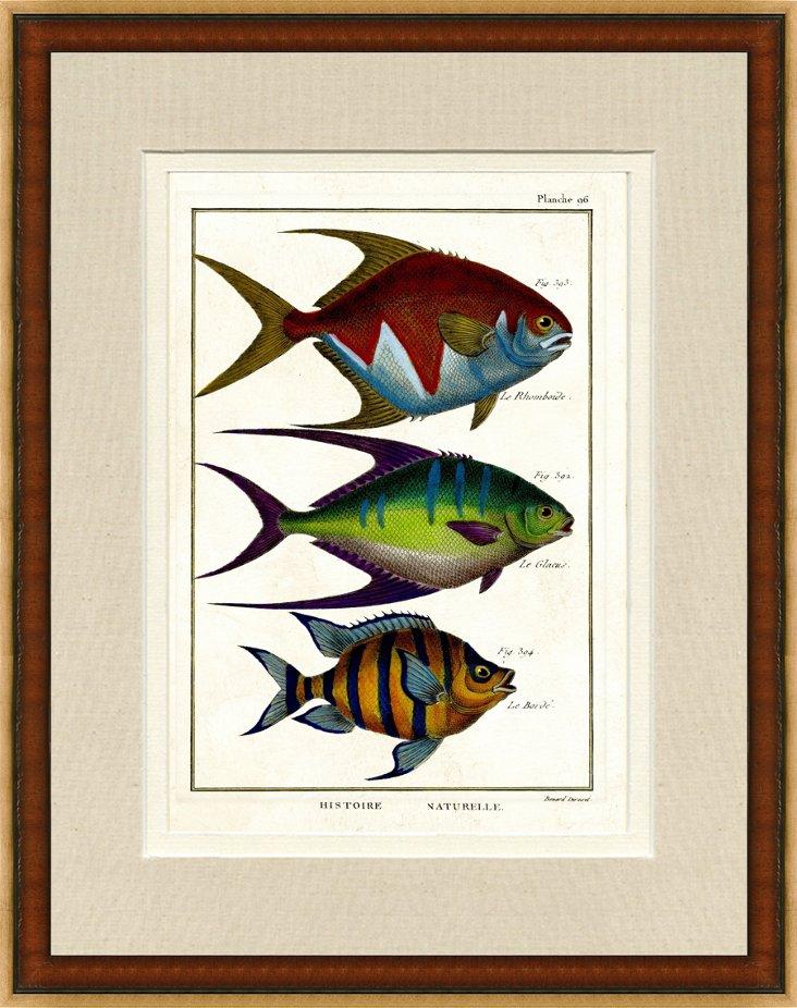 Wood Framed Fish Print