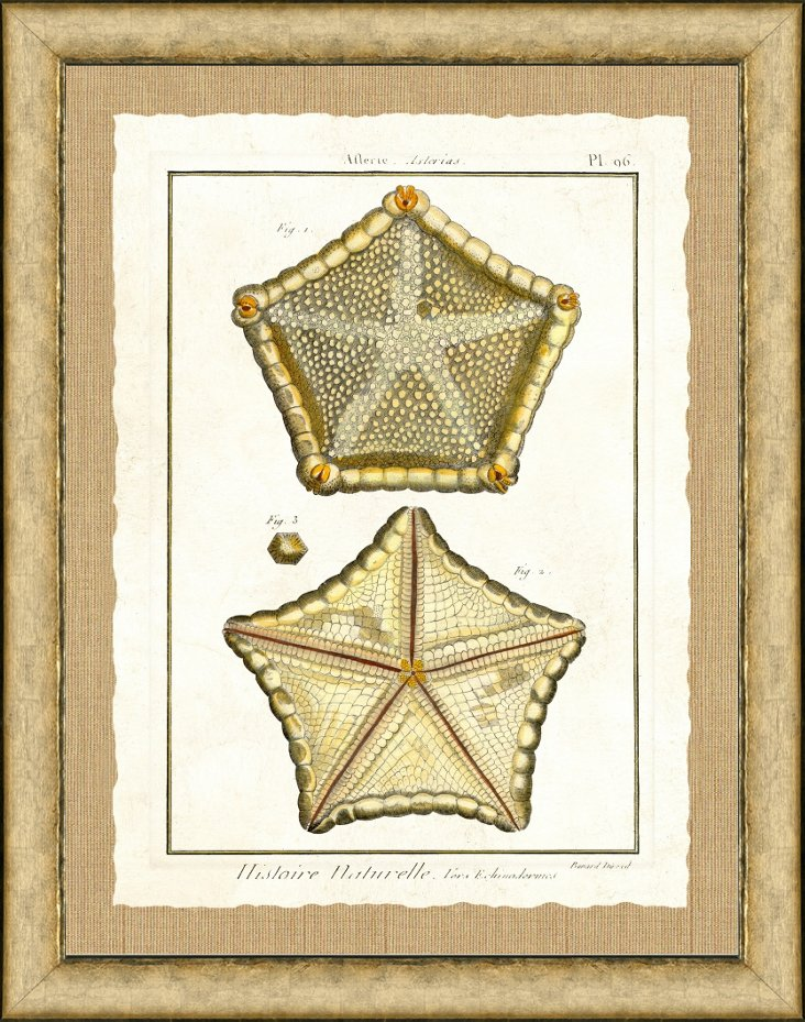 Burnished Silver Framed Starfish