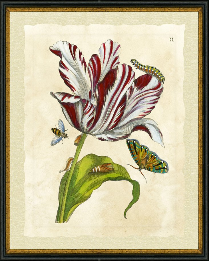 Black and Gold Lip Framed Floral Insect