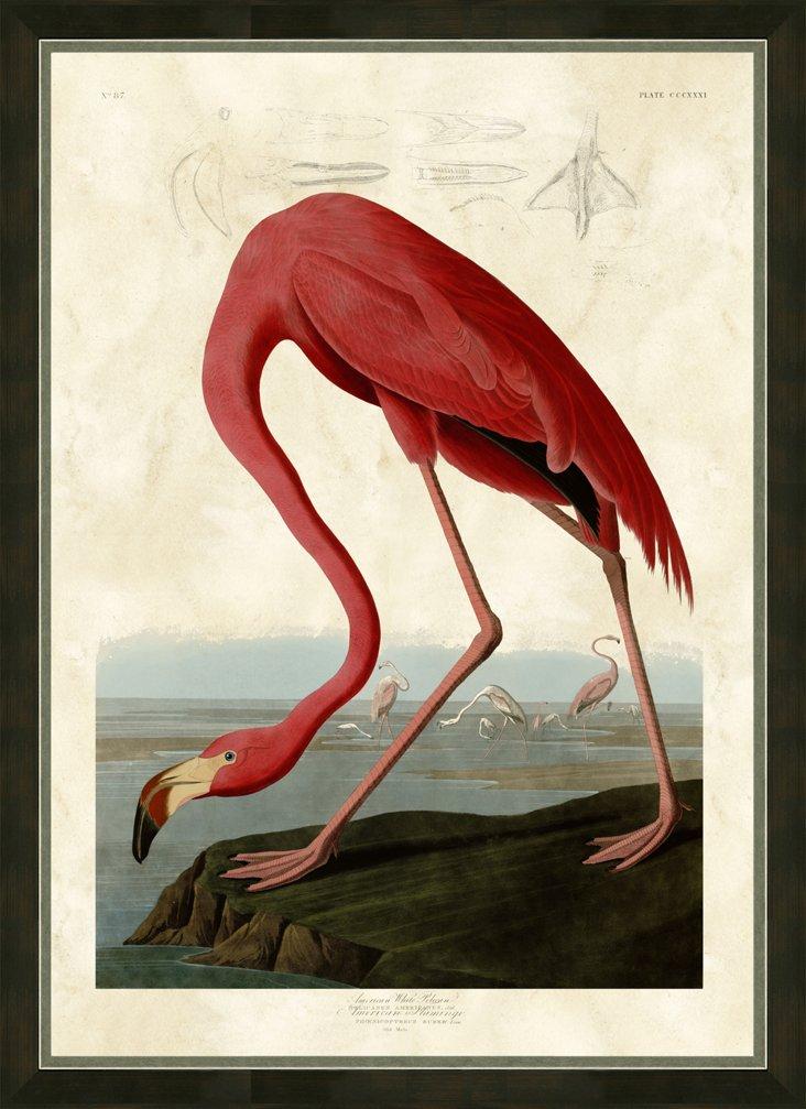 Audubon Flamingo Print